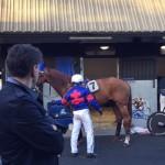 reper chevaux